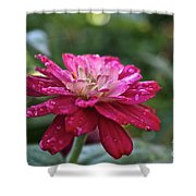 Zinnia Quenched Shower Curtain