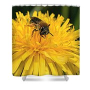 A Bee In A Dandelion Shower Curtain