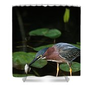 A Green Heron With Fish Shower Curtain