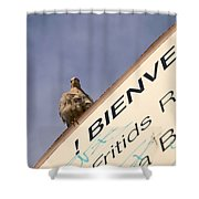 African Collared Dove 2 Shower Curtain