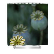 After The Flower 3 Shower Curtain