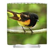 American Redstart Warbler Shower Curtain