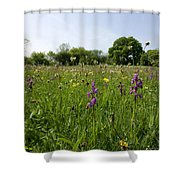 Ancient Hay Meadow Shower Curtain