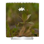 Arctic Starflower Shower Curtain