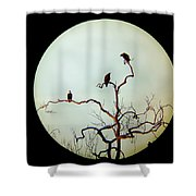 Bald Eagle And Two Juveniles Shower Curtain