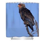 Bataleur Eagle Viewpoint Shower Curtain