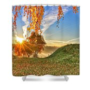 Birches At Sunrise  Shower Curtain