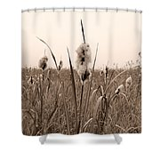 Broadleaf Cattail 1 Shower Curtain