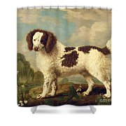 Brown And White Norfolk Or Water Spaniel Shower Curtain by George Stubbs