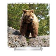 Brown Bear 4 Shower Curtain