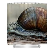 Burgundy Snail Shower Curtain