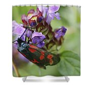 Burnet Moth Shower Curtain