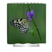 Butterfly On Flower  Shower Curtain by Sandy Keeton