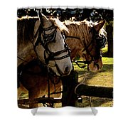 Carriage Ride Shower Curtain