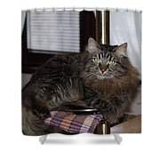 Cat On The Bar Shower Curtain