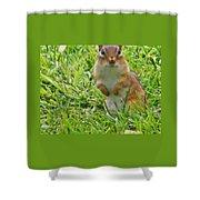 Chipmunck Standing     August Indiana Shower Curtain