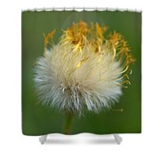 Coltsfoot B2 Shower Curtain