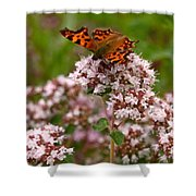 Comma Butterfly Shower Curtain
