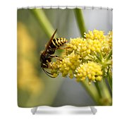 Common Wasp Shower Curtain