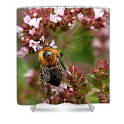 Cuckoo Bumblebee 2 Shower Curtain