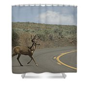 Deer 1 Shower Curtain