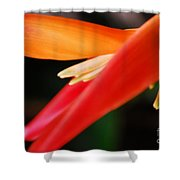 Fine Art - Bird Of Paradise Shower Curtain