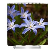 Glory Of The Snow 1 Shower Curtain
