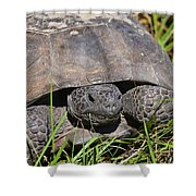 Gopher Tortoise Close Up Shower Curtain