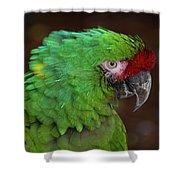 Great Green Macaw Ara Ambiguus Shower Curtain