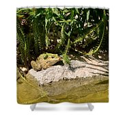 Green Frog Sitting At The Pond Shower Curtain