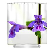 Ground-ivy Shower Curtain