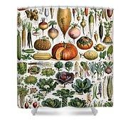 Illustration Of Vegetable Varieties Shower Curtain