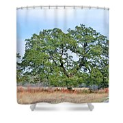 Land In The Hood Shower Curtain