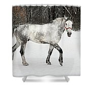 Light  Grey Horse Goes On A Winter Glade  Shower Curtain