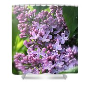 Lilacs On A Misty Morning Shower Curtain