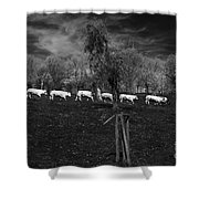 Line Of Cows Shower Curtain