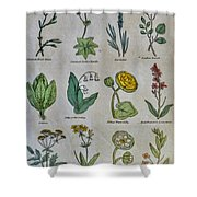 Lithography Of Common Flowers Shower Curtain