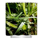 Look Down For Beauty Shower Curtain