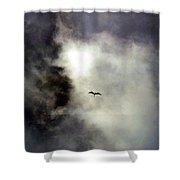 Magnificent Frigatebird Shower Curtain