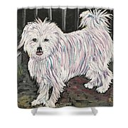 Maltese Terrier Mix In Living Color Shower Curtain