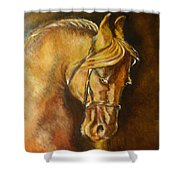 A Winning Racer Brown Horse Shower Curtain