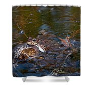 Mixed Frogs Shower Curtain