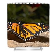 Monarch 2 Shower Curtain