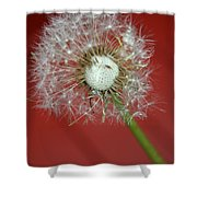 Nature Red Shower Curtain