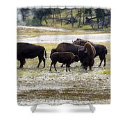 North American Female Buffalo And Her Offspring Showing Affecti Shower Curtain