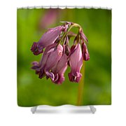 Pacific Bleeding Heart 1 Shower Curtain
