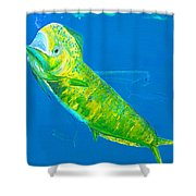 Prized Dolphin Painting Shower Curtain