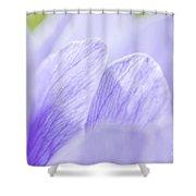 Purple Anemone Flower  Shower Curtain