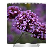 Purpletop Vervain Shower Curtain