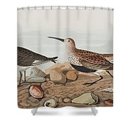 Red Backed Sandpiper Shower Curtain